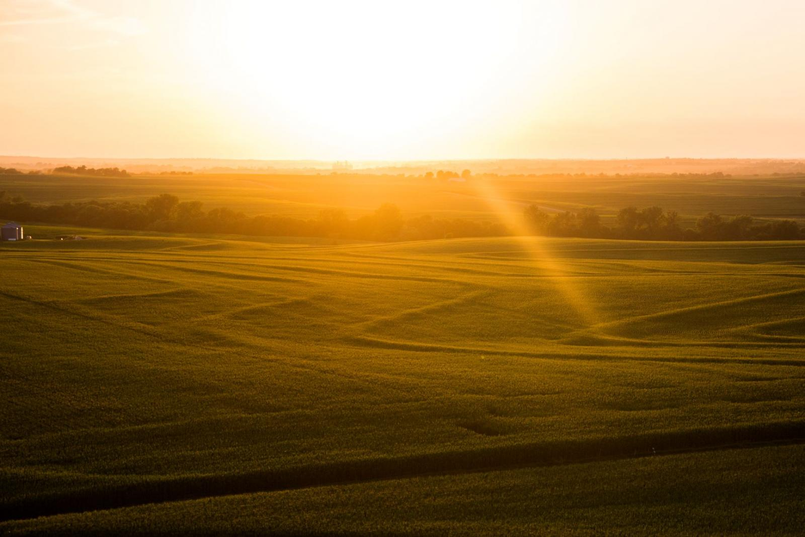 aerial view of corn fields at sunset